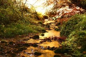 Ruisseau à Craponne