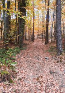Boubounel Serge Chemin en forêt