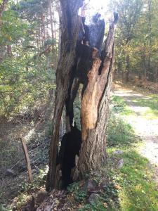 Peyron Thibault arbre mort brûlé par la foudre sur le GR 3