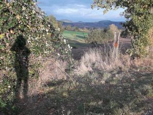Pichon Katy à proximité du Monteil